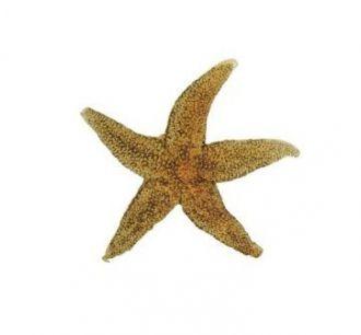 Estrela do Mar Decorativa em Resina Laranja