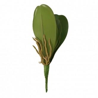 Folha de Orquídea Artificial x5 Verde 24cm