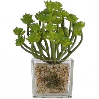 Suculenta Artificial em Vaso Transparente Flor Verde