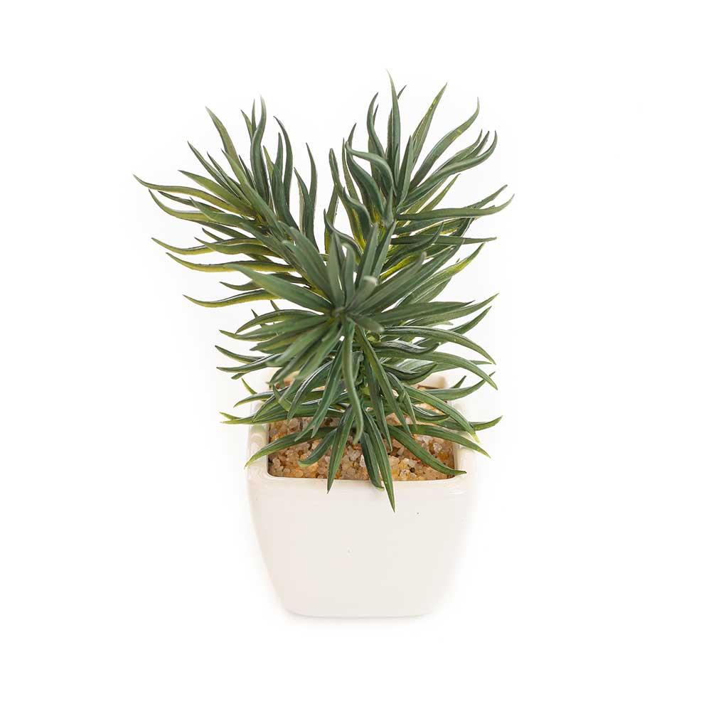Mini Vaso Cerâmica Branco com Suculenta Alecrim 15cm