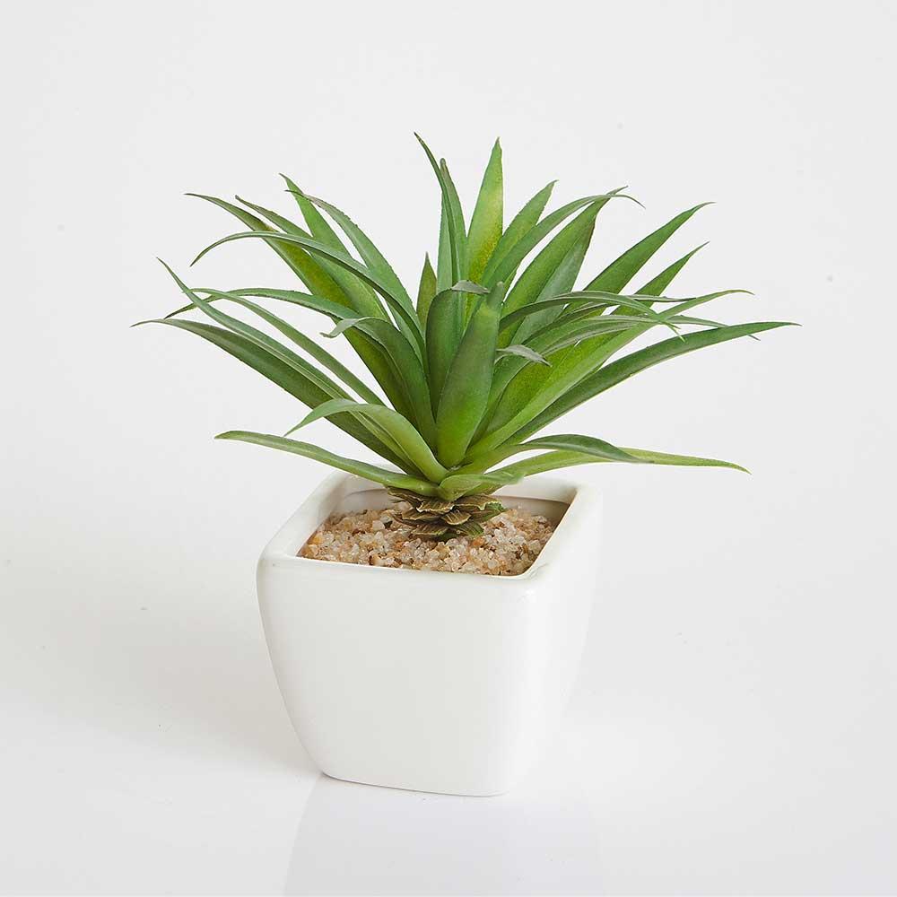 Mini Vaso Cerâmica Branco com Suculenta Silvestre 15cm