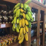 Penca de Bananas