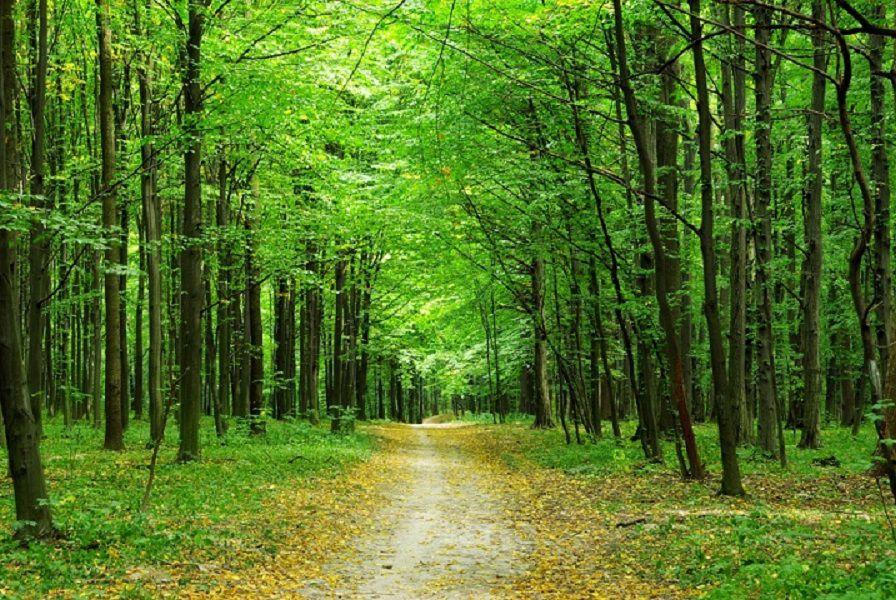 PAINEL FOTOGRÁFICO  -  Floresta 1