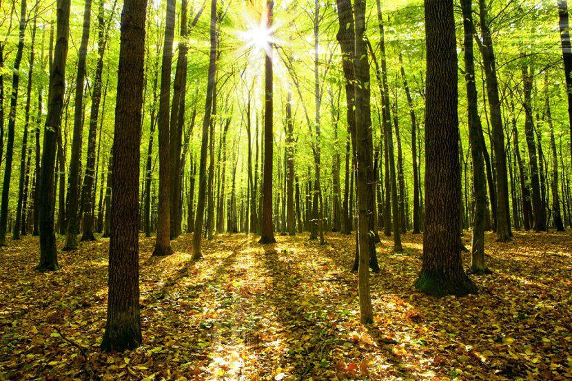 PAINEL FOTOGRÁFICO  -  Floresta 4