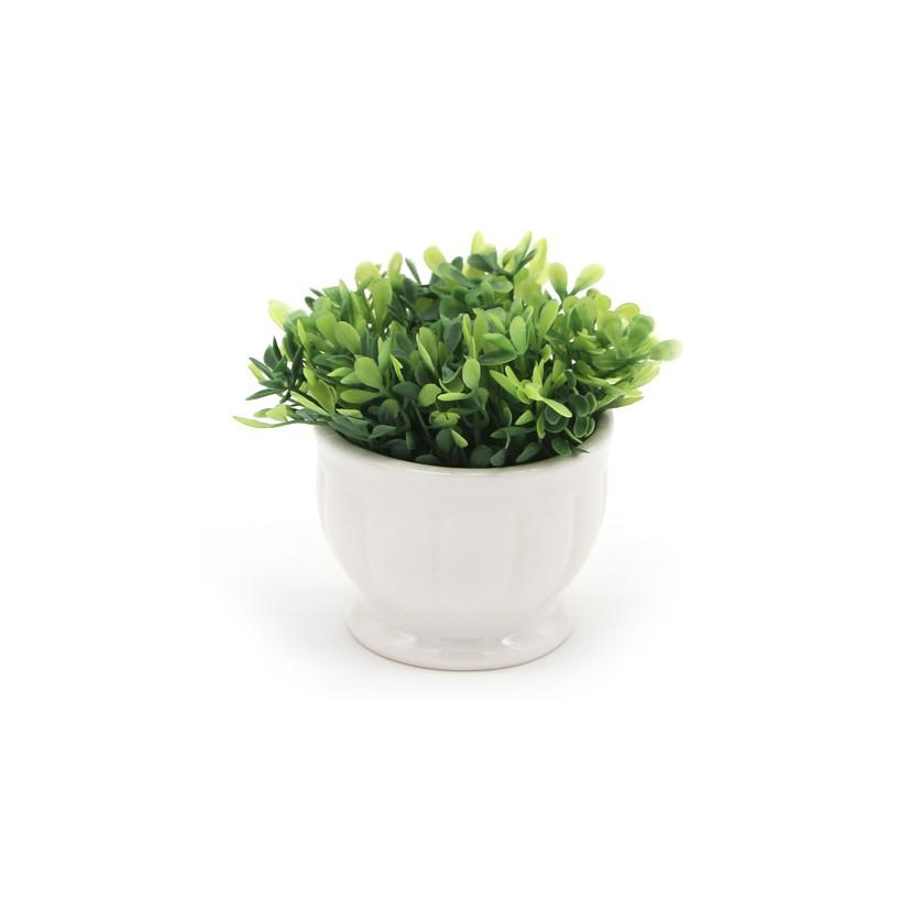 Vaso Cerâmica Baixo Topiaria