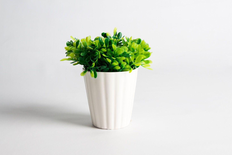 Vaso Cerâmica Copo Topiaria