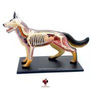 Anatomia do Cachorro