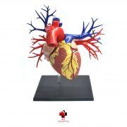 Anatomia do Coração Deluxe