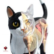 Anatomia do Gato