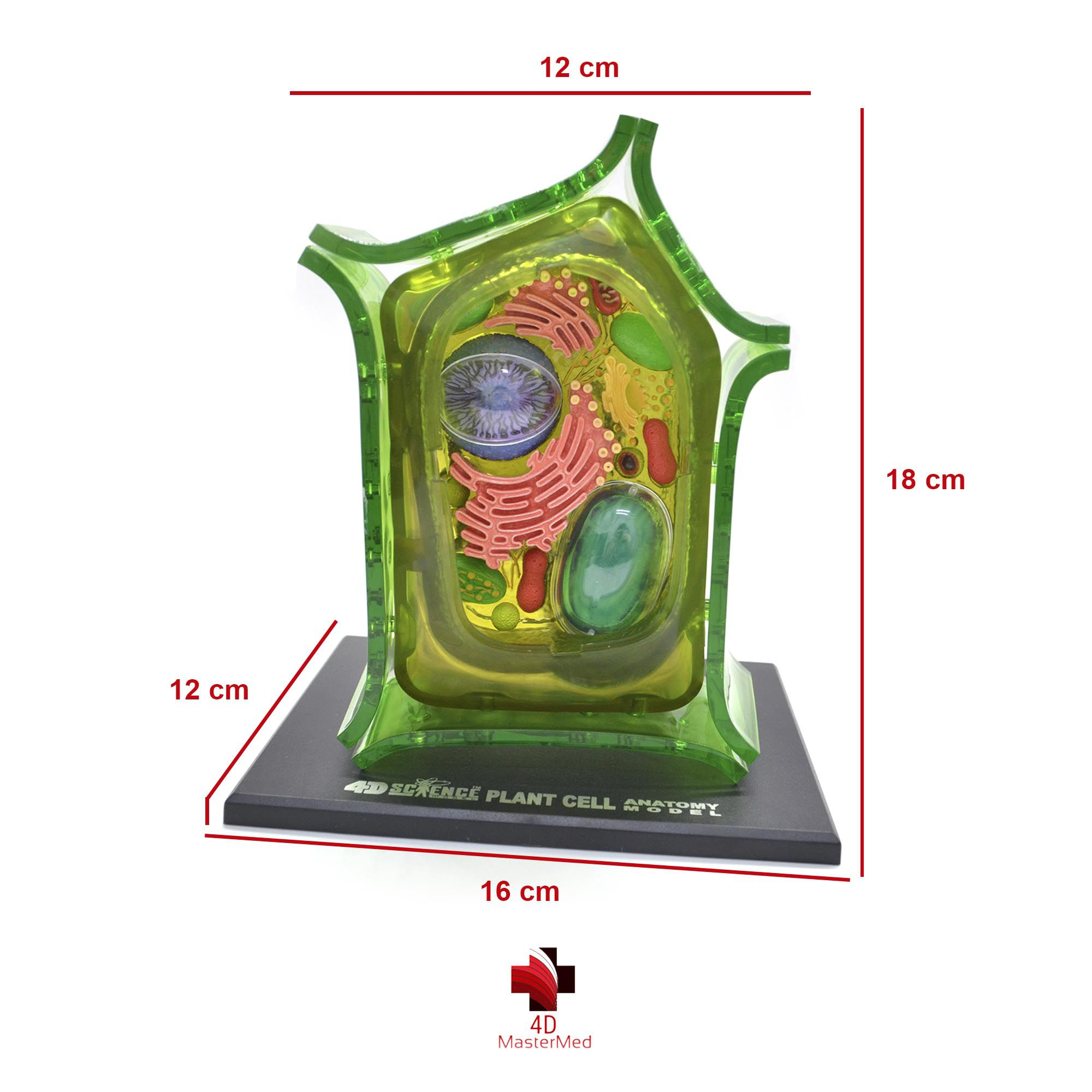 Anatomia da Célula Vegetal