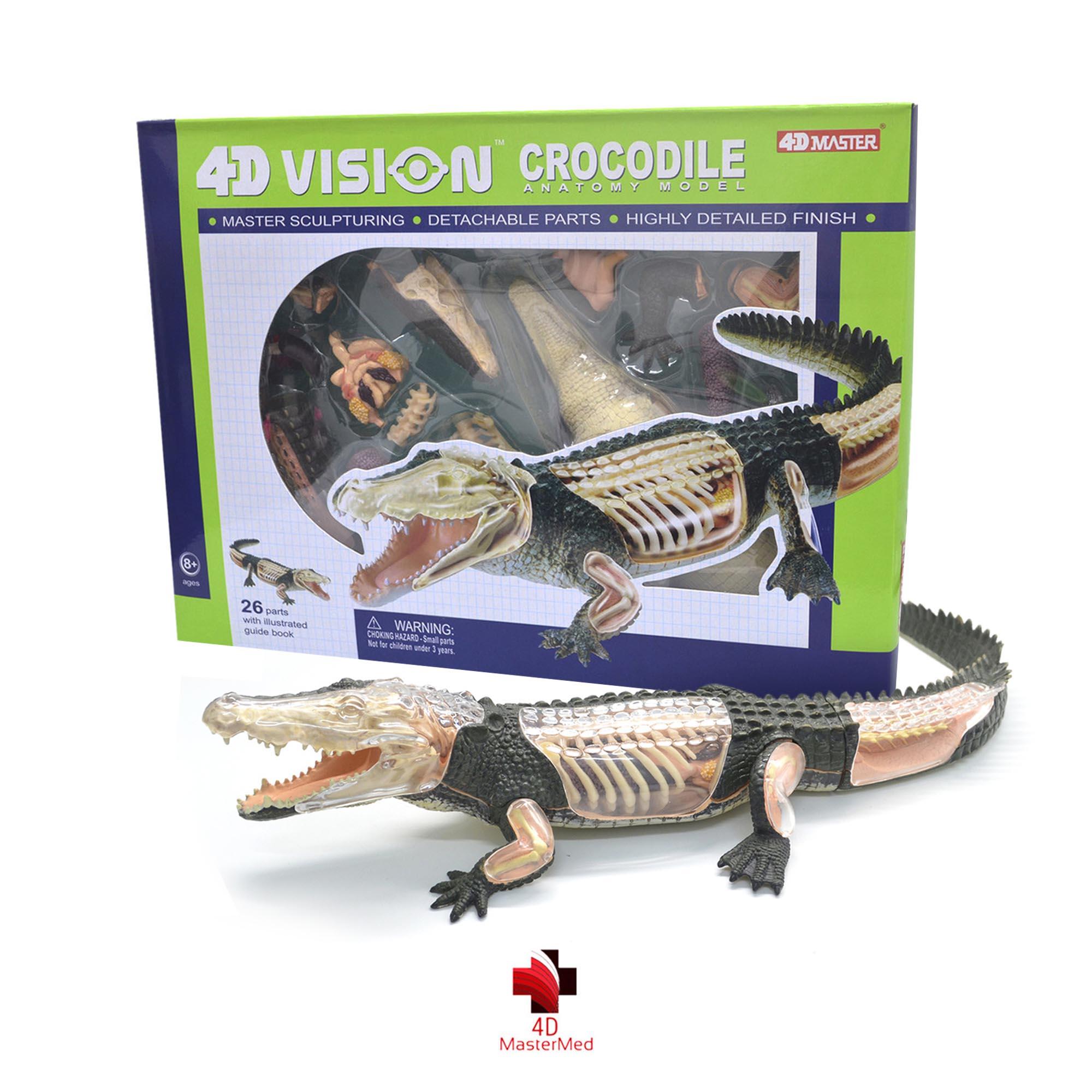 Anatomia do Crocodilo