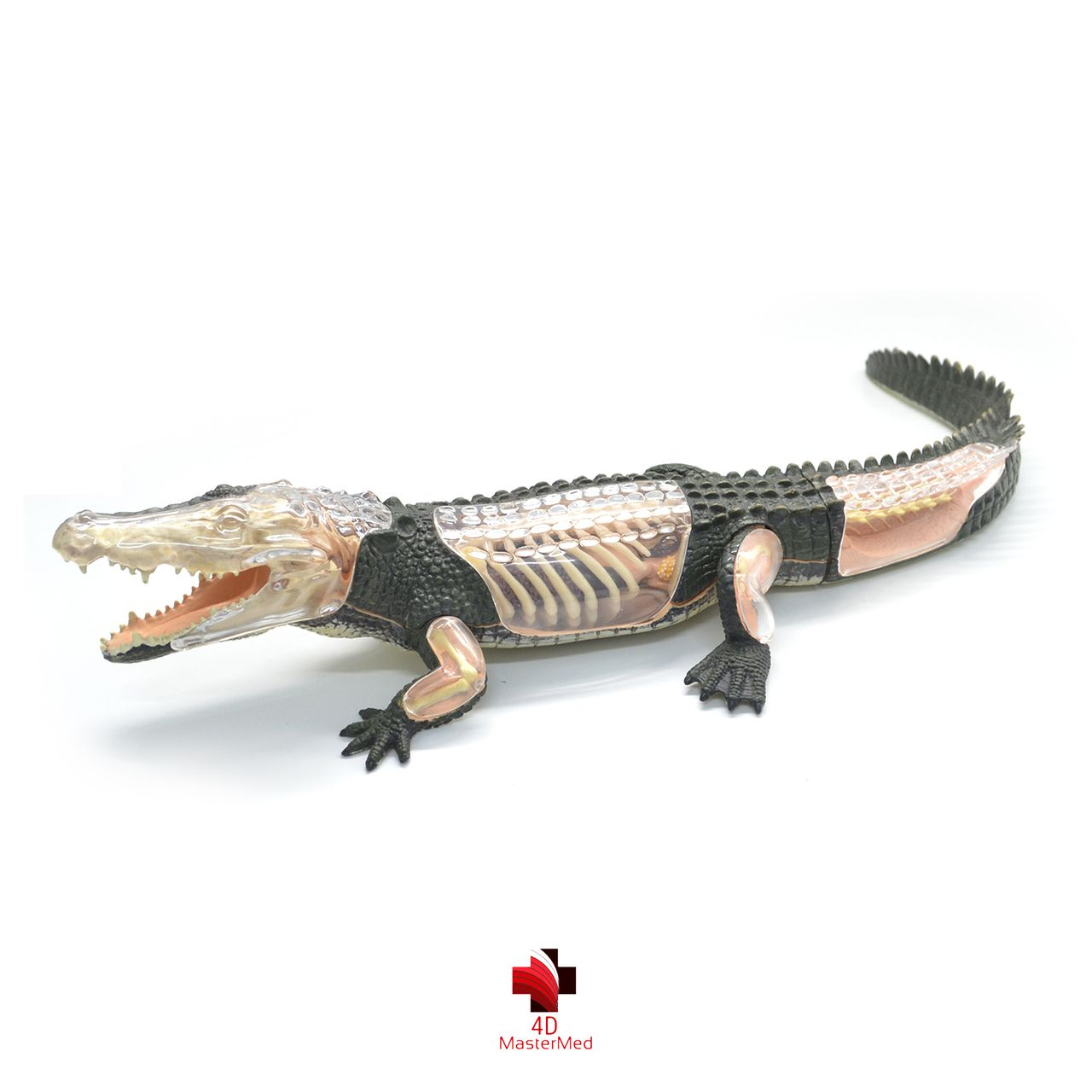Anatomia do Crocodilo