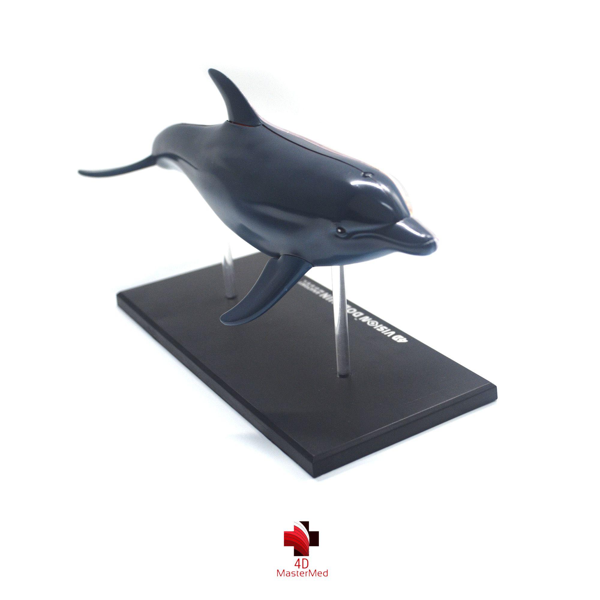 Anatomia do Golfinho