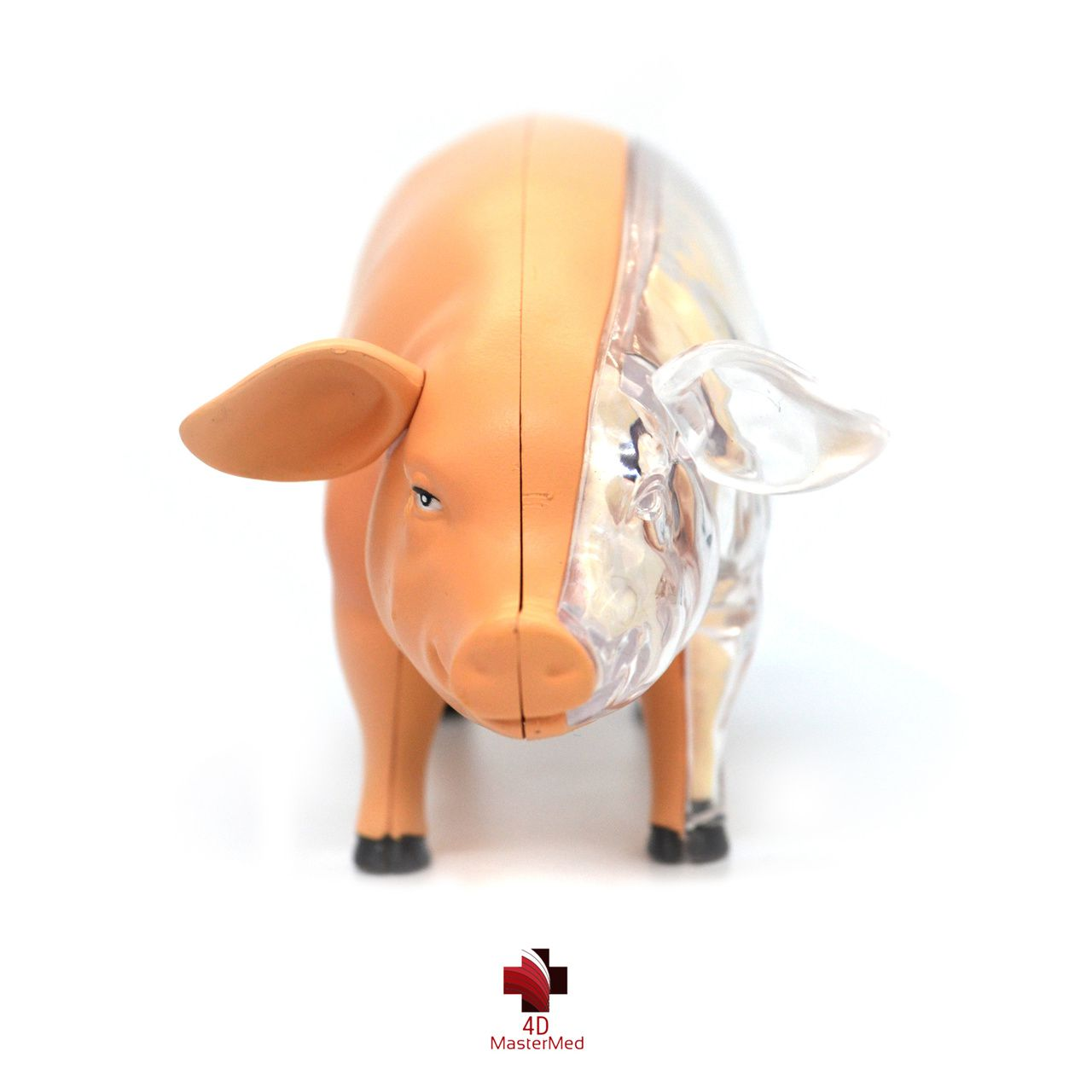 Anatomia do Porco