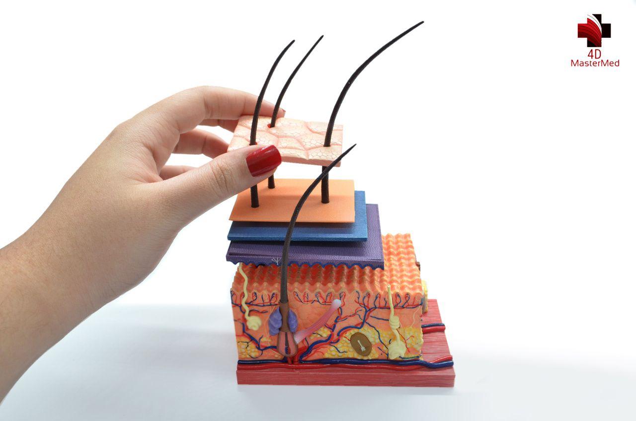 Anatomia do Tecido da Pele