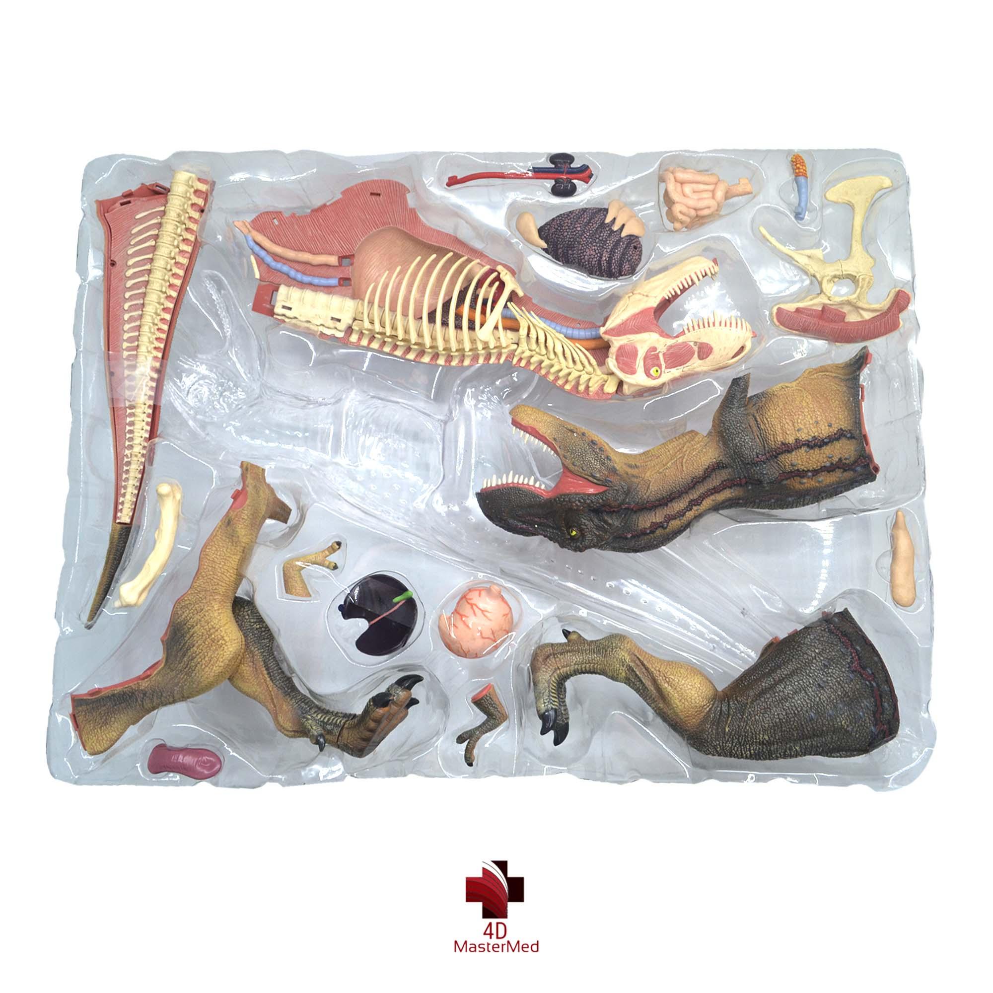 Anatomia do Tiranossauro Rex