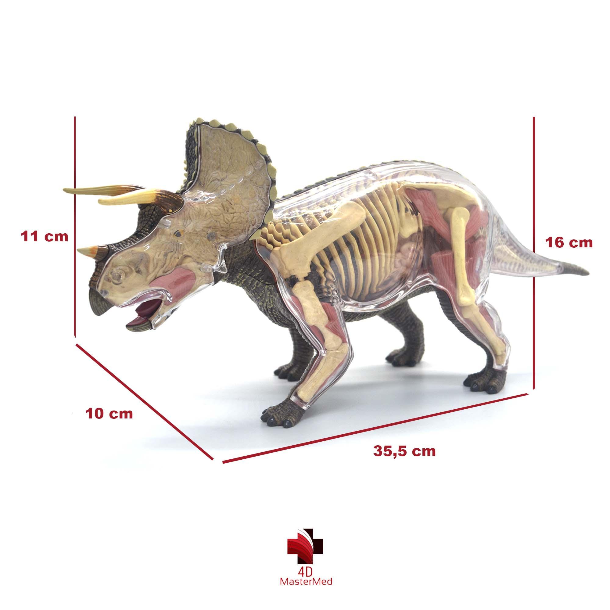 Anatomia do Triceratops
