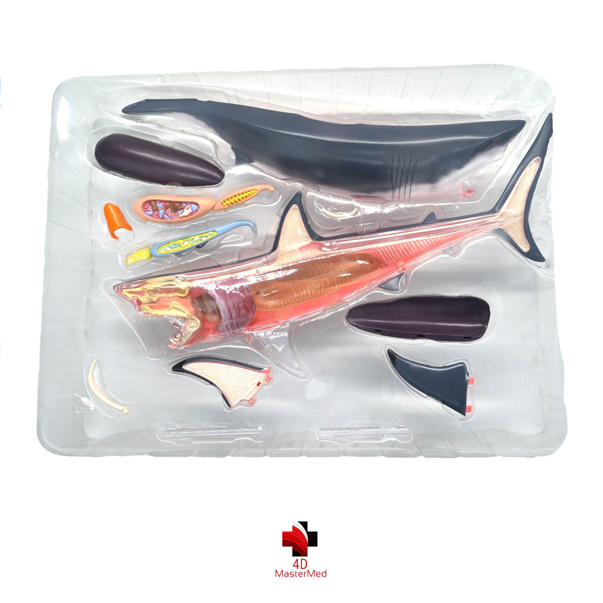 Anatomia do Tubarão Branco