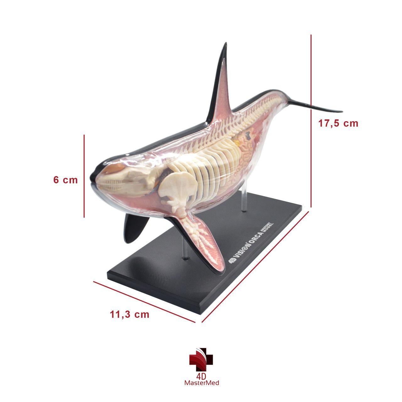 Kit Marinho - Orca, Golfinho e Tubarão