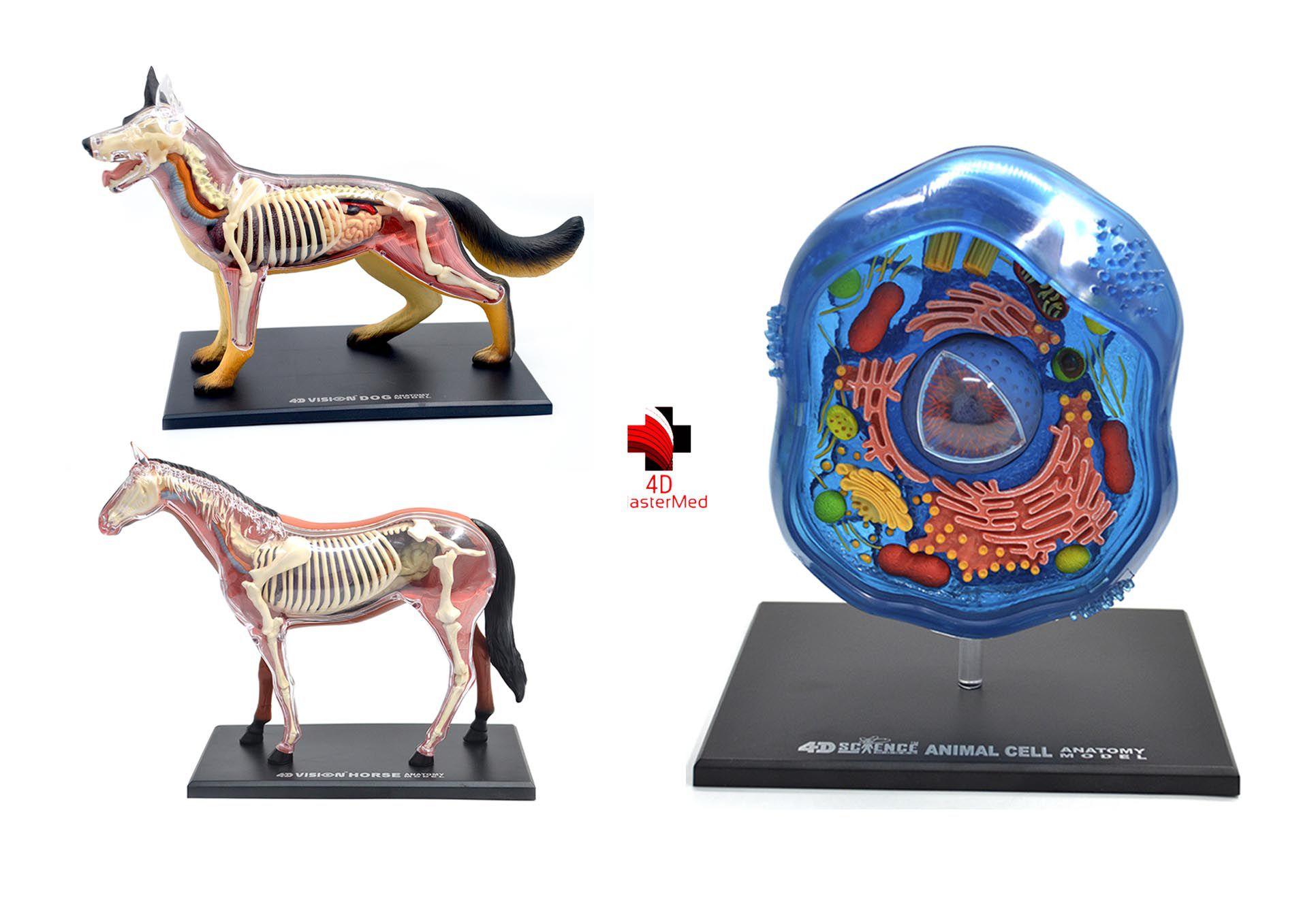 Kit Veterinário - Cachorro, Cavalo e Célula Animal