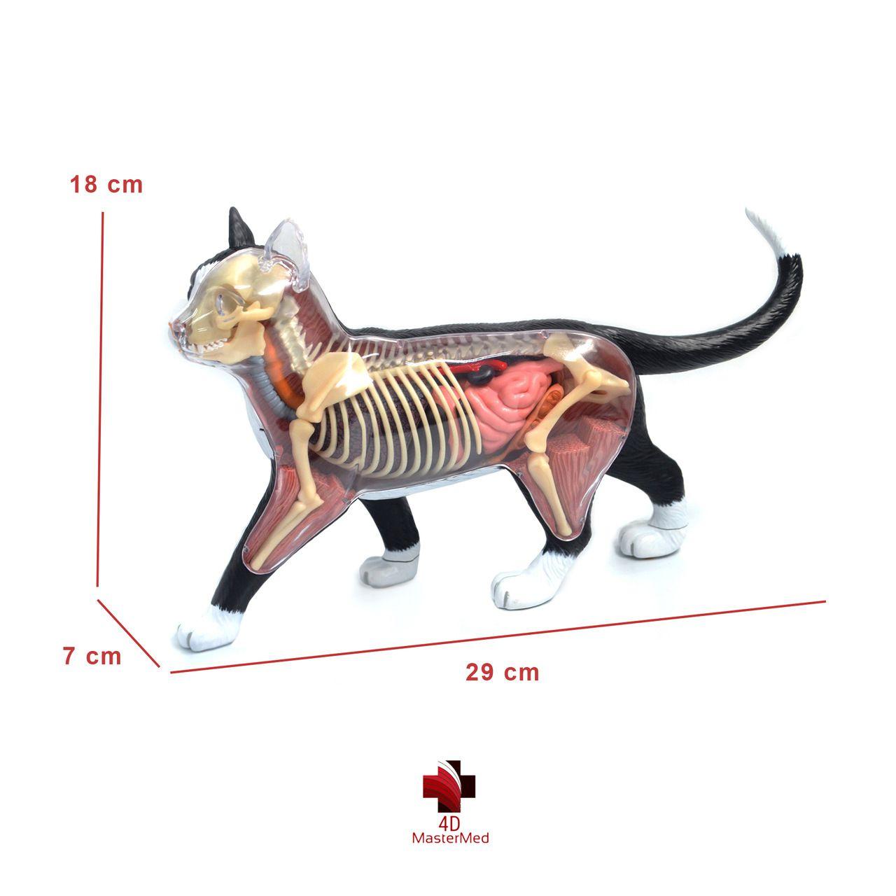 Kit Veterinário para estudo - Cachorro, gato e rato
