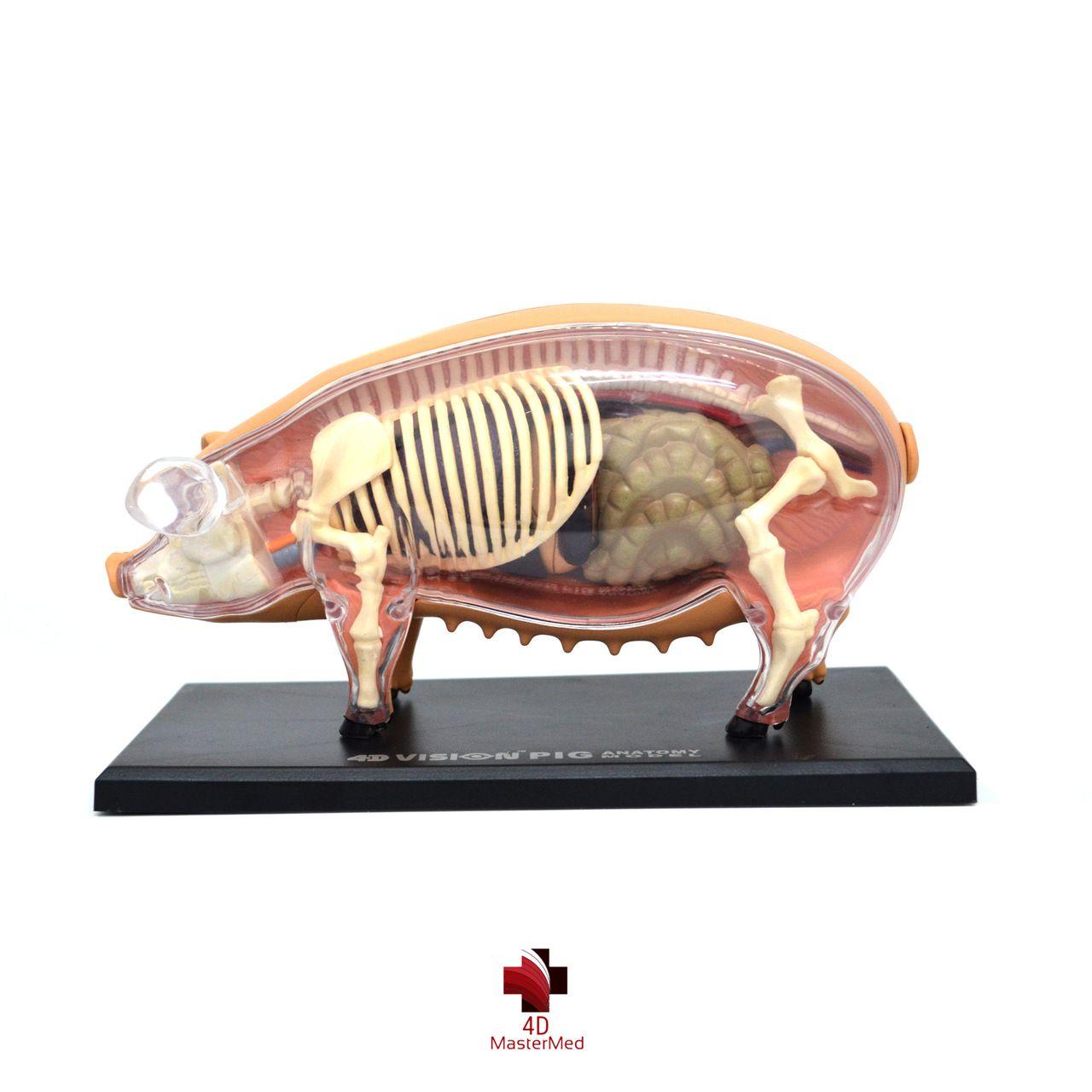 Kit veterinário para estudo - Cavalo, Galinha, Porco e Vaca