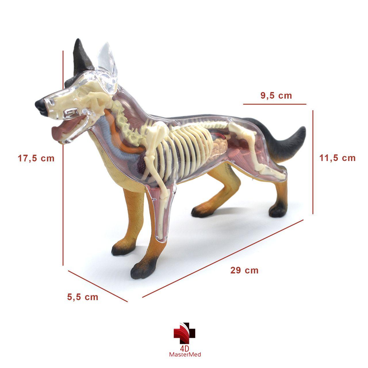 Kit Veterinário para estudo - Cavalo, Vaca e Cachorro