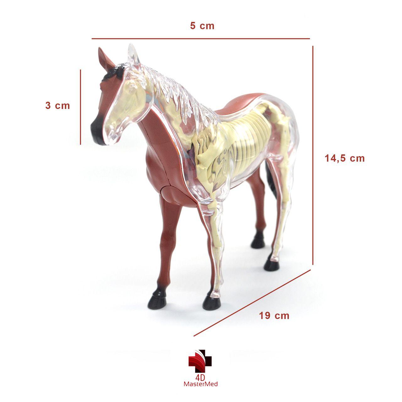 Kit Veterinário para estudo - Cavalo, Vaca, Galinha