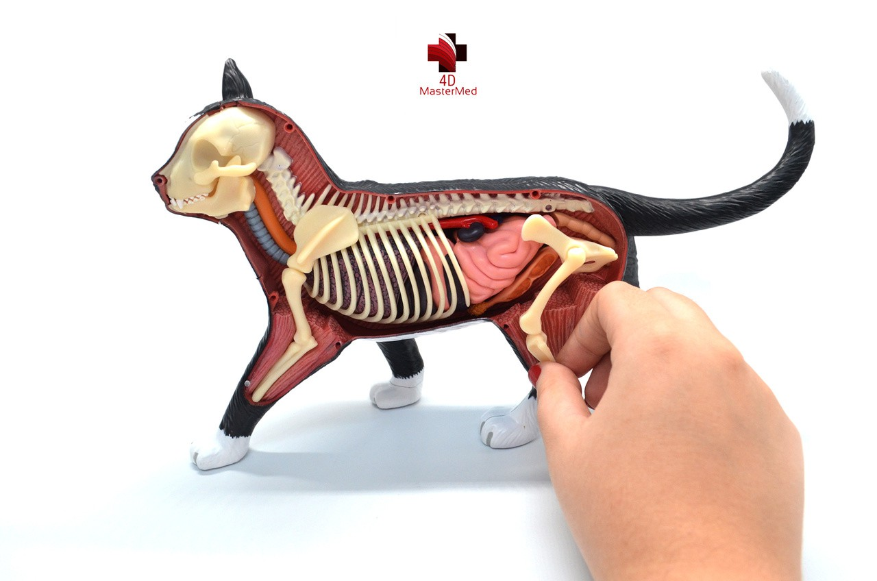 Kit Veterinário para estudo - Gato, Vaca e Porco