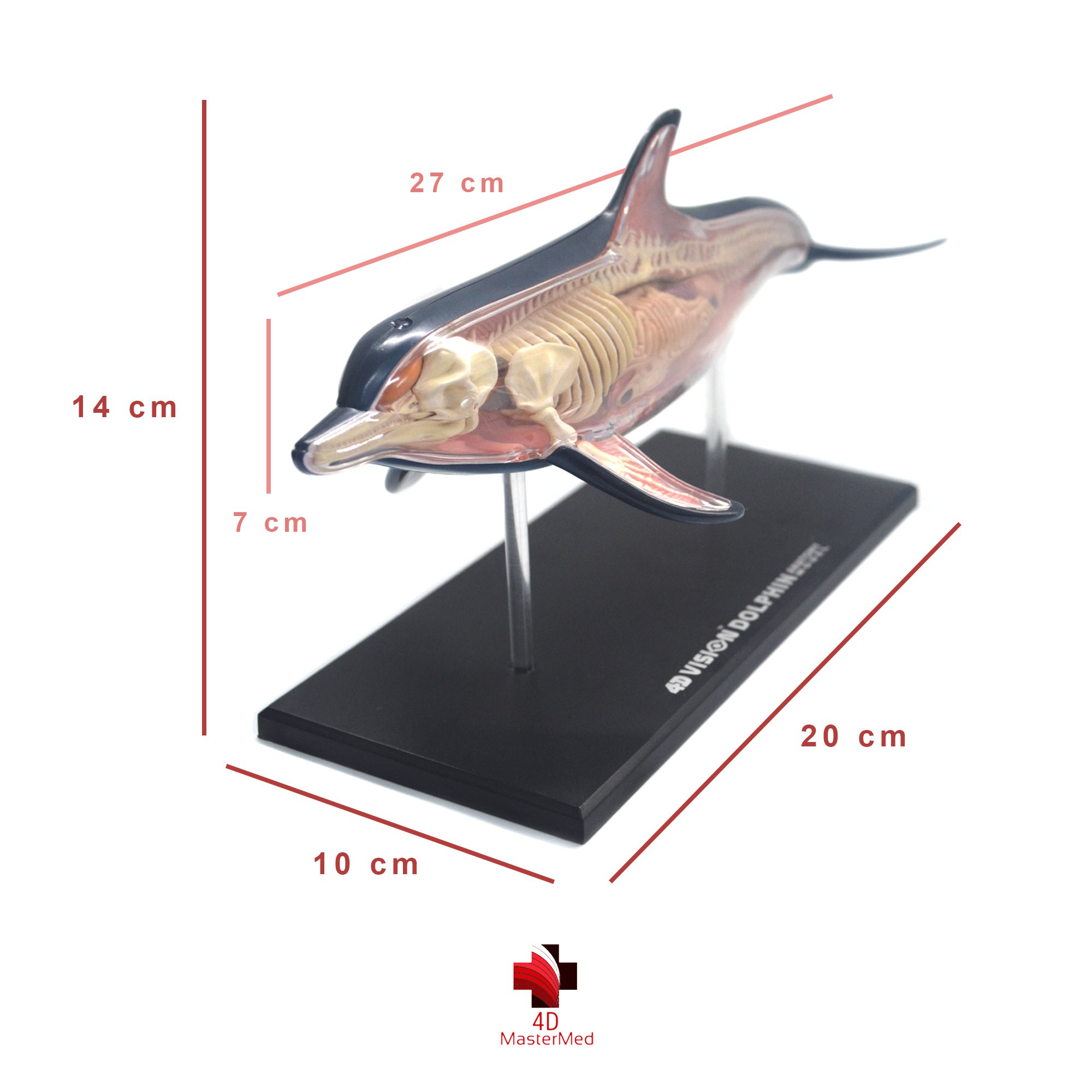 Kit Veterinário para estudo - GOLFINHO E ORCA.