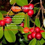 Muda de Araça Vermelho - Psidium cattleianum