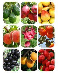 Combo de mudas frutíferas