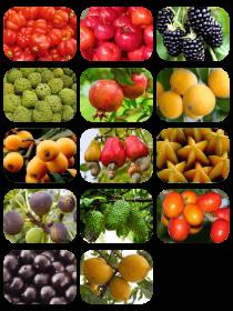 Combo de mudas frutíferas basic