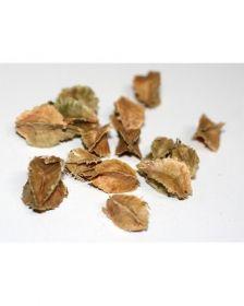 Sementes Pau Marfim - Balfourodendron riedelianum - 100g