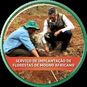Serviço de Implantação de Florestas de Mogno Africano