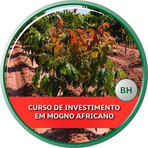 29/10/2019 - Curso de Investimento em Mogno Africano - Belo Horizonte/MG
