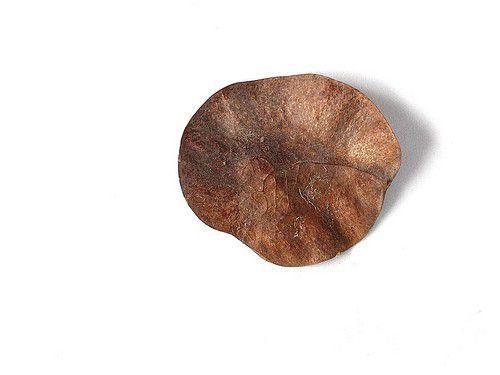 Mudas de Aldrago - Pterocarpus violaceous
