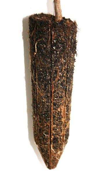 Muda de Araça Amarelo - Psidium cattleianum