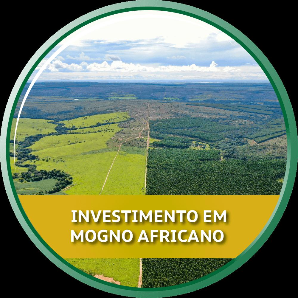Áreas para investimento em Mogno Africano em Minas Gerais