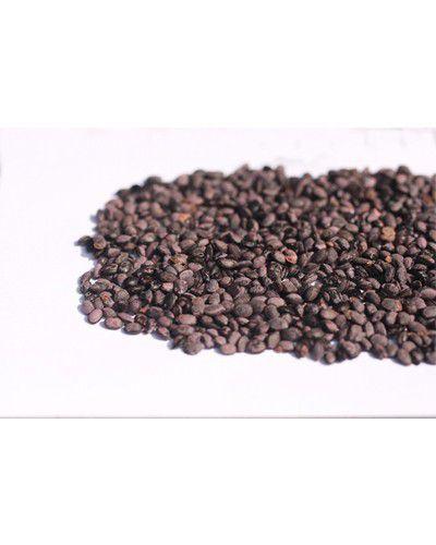 Sementes de Acácia Negra - Acacia mearsi - 250g