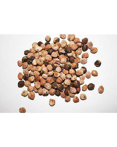 Sementes de Café de Bugre - Cordia ecalyculata - 100g