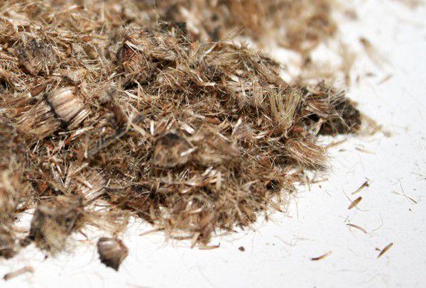Sementes de Candeia - Eremanthus erythropappus - 100g