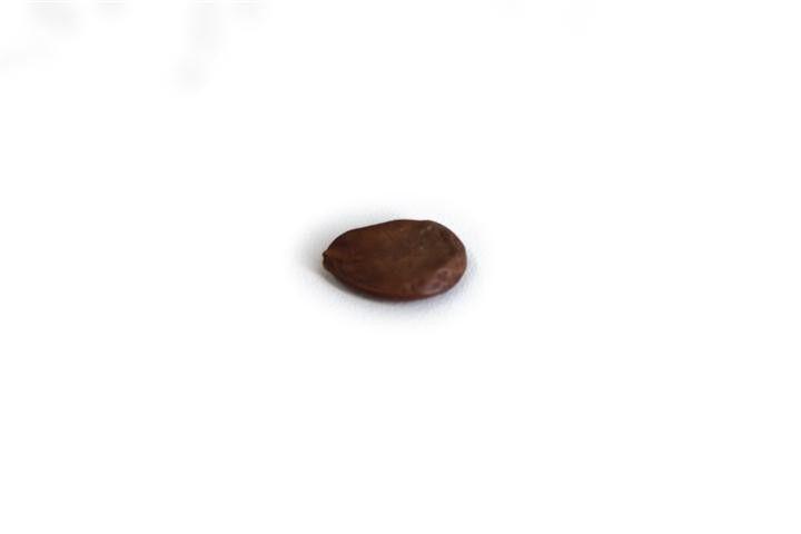 Sementes de Coração de Negro - Poecilanthe parviflora - 100g