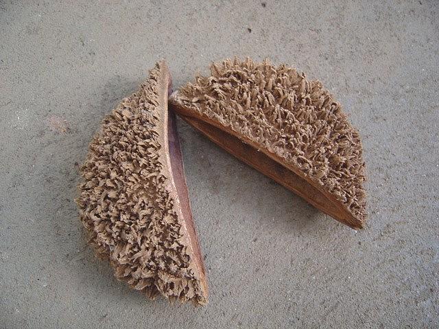 Sementes de Ipê Tabaco - Zeyheria tuberculosa - 250g