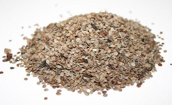 Sementes de Lobeira - Solanum lycocarpum - 250g