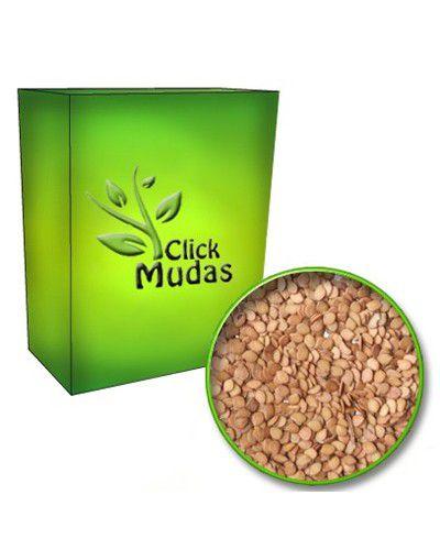 Sementes de Maricá - Mimosa bimucronata - 100g