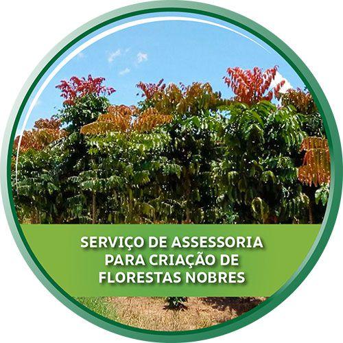 Serviço de Assessoria para Criação de Florestas Nobres