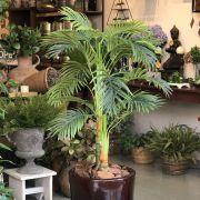 Árvore Palmeira