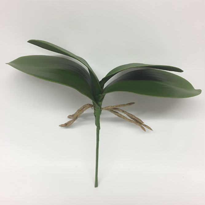 Folha de Orquídea Verde
