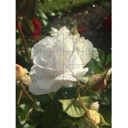 Kit 10 Quebra-Cabeça Cognitivo Reabilitação para Idosos - Flores e Rosas